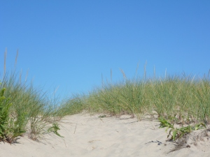 Path Through Dunes